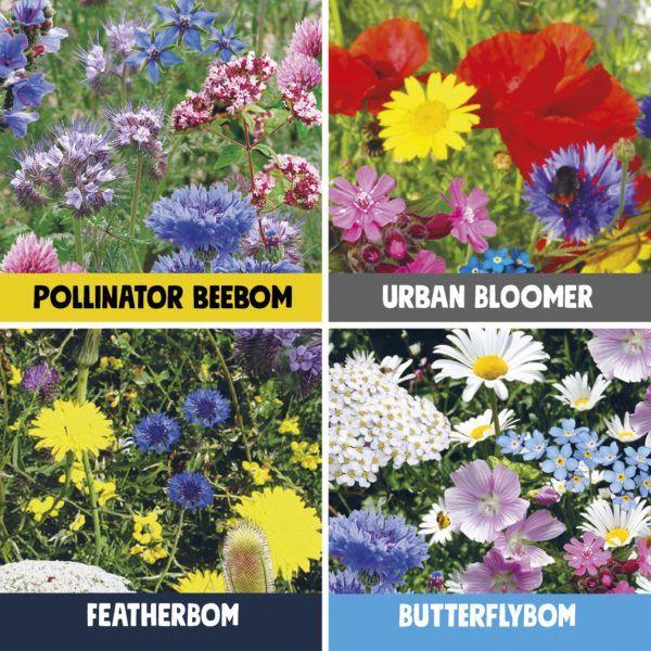 Birds, Bees & Butterflies Seedbom flowers