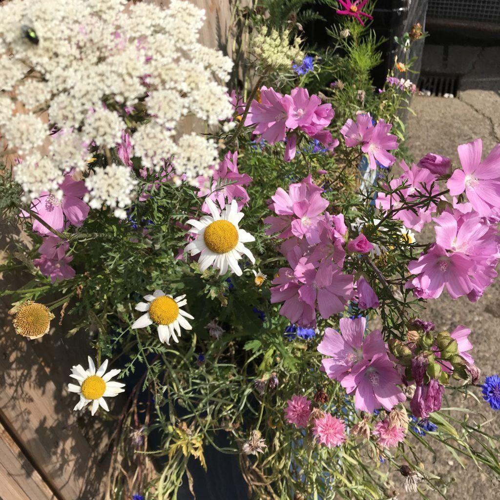 Seedbom wildflowers