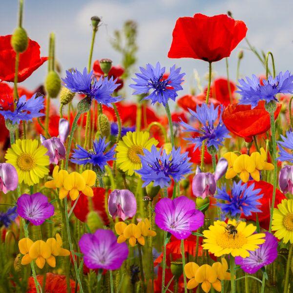 Rainbowbom flowers